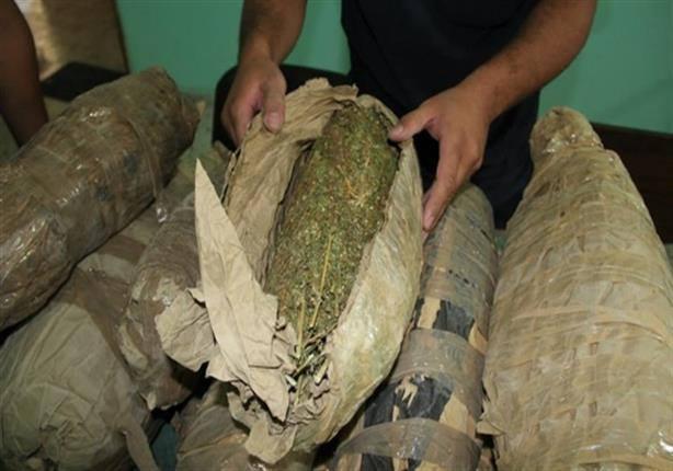 """ضبط عاطل بحوزته عدد""""6″ لفافات من نبات البانجو المخدر بأبوصوير"""