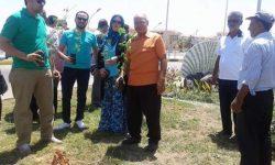 """مبادرة """" شجرها """" . تزرع 500 شجرة مورينجا برأس البر"""