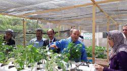 إنتهاء الدورة الاولي في زراعة الأسطح : حدائق الأسطح ( Roof Gardens )