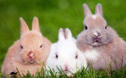 تفسير حلم رؤية الأرانب فى المنام