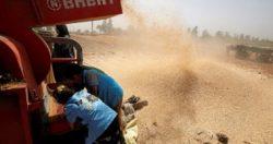 مصر ترفض 63 ألف طن من القمح الرومانى بسبب فطر الإرجوت