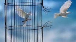 الحرية الشخصية بين الواقع والمفروض