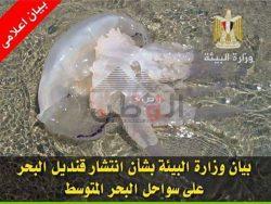بيان وزارة البيئة بشأن انتشار قناديل البحر على سواحل البحر المتوسط المصرية