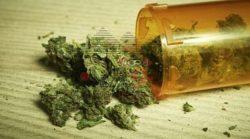 ضبط 16 كيلو من مخدر الأستروكس الخام فى مصنع لتصنيع المخدرات بالجيزة