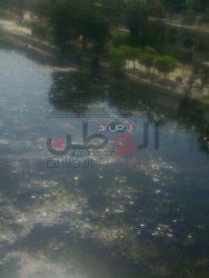 بالصور…إلقاء مخلفات فى مياة نهر النيل وأين العاملين بوزارة الراى