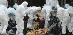 إنفلونزا الطيور تتفشى في الصين