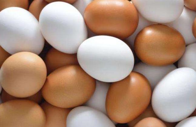 اسعار البيض اليوم | هل تلجأ مصر إلى الاستيراد